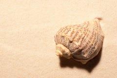 раковина моря песка поля глубины отмелая волейбол лета пляжа шарика предпосылки красивейший пустой Стоковое Изображение RF