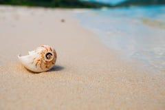 раковина моря песка поля глубины отмелая волейбол лета пляжа шарика предпосылки красивейший пустой Стоковое Изображение