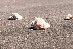 раковина моря песка поля глубины отмелая Стоковая Фотография RF