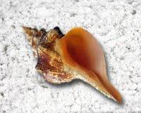 раковина моря песка упорки фото вставки рожочка фантазии клиента предпосылки младенческая ваша Стоковые Изображения