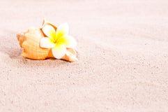 раковина моря песка цветка пляжа Стоковые Изображения