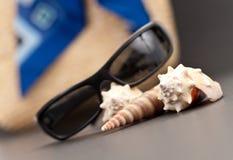 раковина моря пляжа имуществ Стоковое Фото