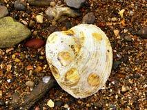 Раковина моря пляжа Коннектикута Стоковые Изображения