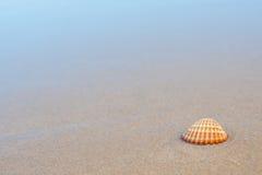раковина моря пляжа песочная Стоковое Изображение RF