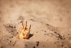 раковина моря пляжа песочная Стоковое фото RF
