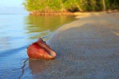 раковина моря пляжа тропическая Стоковые Изображения RF