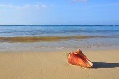 раковина моря пляжа тропическая Стоковые Фотографии RF