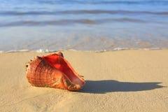 раковина моря пляжа тропическая Стоковые Изображения