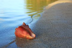 раковина моря пляжа тропическая Стоковое фото RF