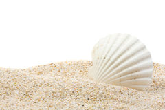 раковина моря пляжа Стоковые Изображения