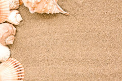 раковина моря пляжа Стоковая Фотография