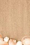 раковина моря пляжа Стоковые Фото
