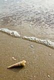 раковина моря пляжа Стоковое фото RF