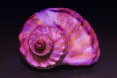 раковина моря предпосылки темная стоковые фотографии rf