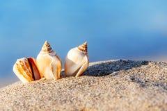 Раковина моря пляжа песка Стоковая Фотография RF
