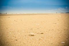 раковина моря пляжа песочная тропическая Стоковые Фото