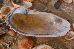 раковина моря пляжа песочная Стоковое Фото