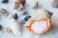 раковина моря соли стоковое фото