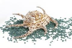 Раковина моря с декоративными камнями Стоковые Изображения