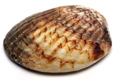 раковина моря стоковое фото