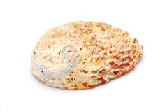 раковина моря abalone Стоковое Изображение