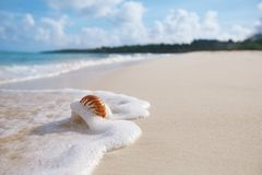 Раковина моря Nautilus в волне моря Стоковое Изображение RF