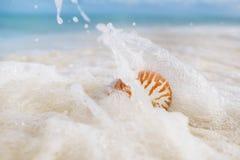 Раковина моря Nautilus в волне моря Стоковые Фото