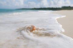 Раковина моря Nautilus в волне моря Стоковое фото RF