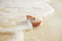 Раковина моря Nautilus на ight восхода солнца пляжа мягком Стоковая Фотография RF