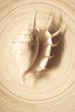 Раковина на бамбуковой плите Стоковые Изображения