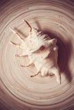 Раковина на бамбуковой плите Стоковое Изображение RF