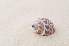Раковина на белом песке Стоковые Изображения