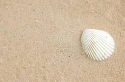 Раковина на песке. Стоковая Фотография