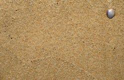 Раковина на песке Стоковое Изображение