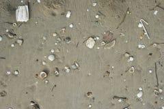 Раковина на песке стоковое фото rf