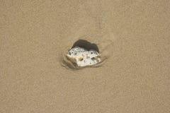 Раковина на песке Стоковые Фотографии RF