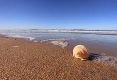 Раковина на песчаном пляже Стоковые Фото