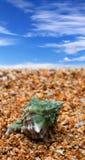 Раковина на пляже песка Стоковое Изображение