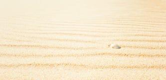 Раковина на пляже, широко Стоковые Изображения
