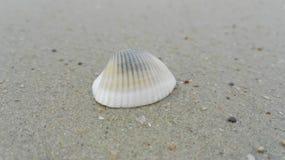 Раковина на пляже стоковое фото rf