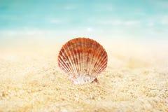 Раковина на предпосылке лета пляжа песка Стоковые Изображения RF