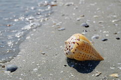 Раковина на пляже Стоковые Изображения RF