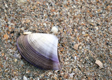 Раковина на пляже Стоковое Изображение