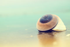 Раковина на пляже Стоковая Фотография