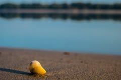 Раковина на пляже Стоковое Изображение RF