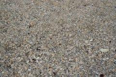Раковина на пляже Стоковое Фото
