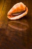 Раковина на старом деревянном столе. Внутри помещения Стоковые Фото