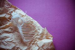 Раковина на фиолетовой предпосылке Стоковое фото RF