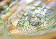 раковина обручального кольца Стоковые Фото