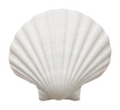 Раковина океана Стоковые Фотографии RF
